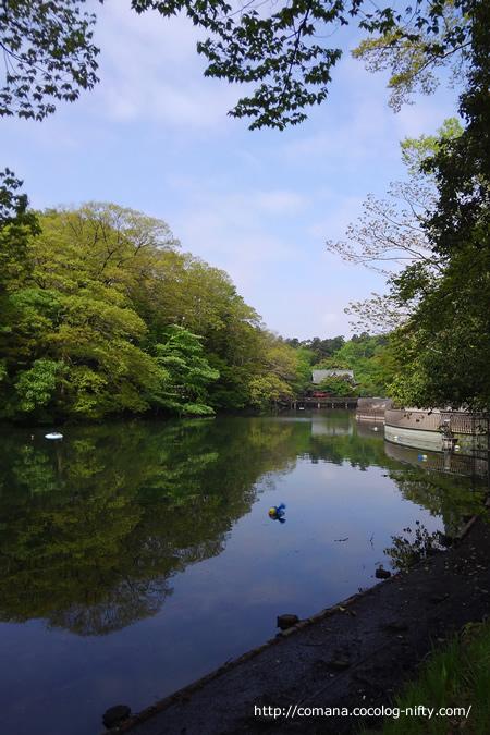 4月下旬の井の頭公園(弁天池)