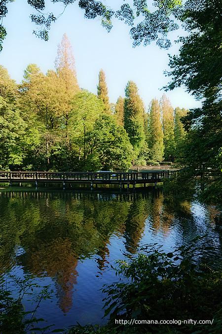 もうすぐ秋ですね@井の頭公園