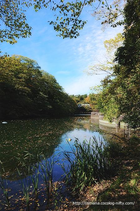 あれっ、もう秋でした@井の頭公園