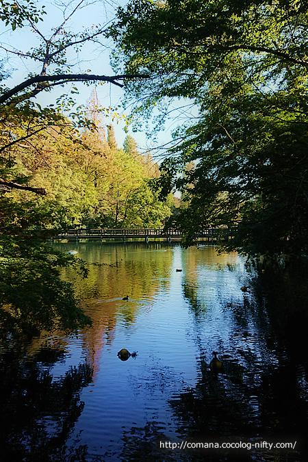 水面に映る木々がきれい